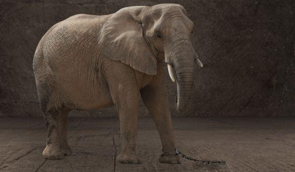 The Elephant Rope Story