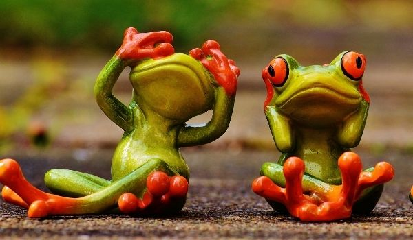 The Group of Frogs Story